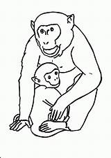 Coloring Animal Gorilla Printable Pages Jungle Template Funny Animals Pdf Cute Templates Monkey Baby Jumbo Popular Coloringhome Getcoloringpages Comments Nnature sketch template