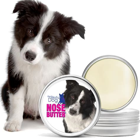amazoncom  blissful dog border collie nose butter