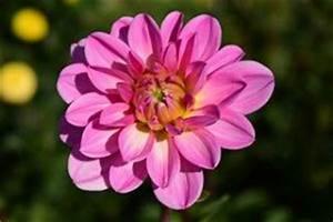 Welche Blumen Kann Man Essen : gem se kr uter blumen die schnecken lieben gerne ~ Watch28wear.com Haus und Dekorationen