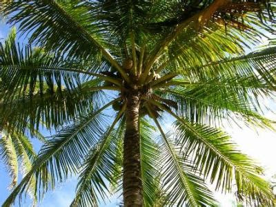 different types of palm plants plants in the beautiful flora of