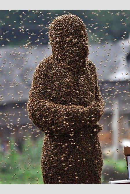 Bee Vs Wasp | Fisch Fail, INC.