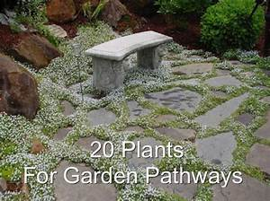 20 Plants For Garden Pathways - Homestead & Survival