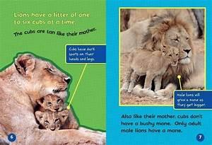Meet A Baby Lion