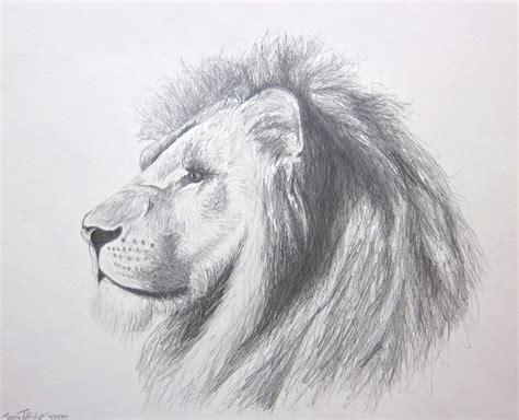 Lion Art Panthera Leo In Pencil Original Pencil Drawing