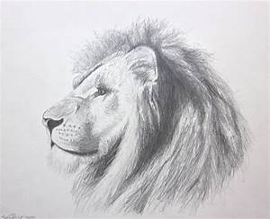 lion art Panthera Leo In Pencil original pencil drawing