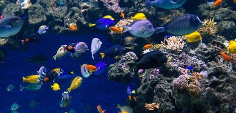 aquarium blue planet orphek