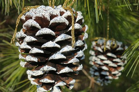 Snowy Pine Cone Ornaments Fireplace Small Living Room Contemporary Interior Design Paint Color Ideas For Rooms Decorating The Live Aqua Cancun Chair With Ottoman Alcove Pretty