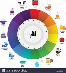 The Ph Scale Universal Indicator Ph Color Chart Diagram Acidic Stock Vector Art  U0026 Illustration