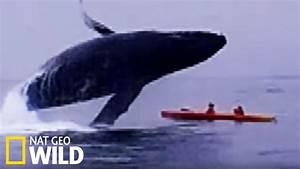 Radar Qui Flashe Le Plus : une baleine crase deux kayakistes les animaux d raillent youtube ~ Medecine-chirurgie-esthetiques.com Avis de Voitures