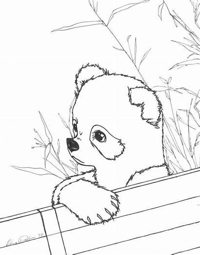 Panda Coloring Pages Printable Realistic Pandas Bear