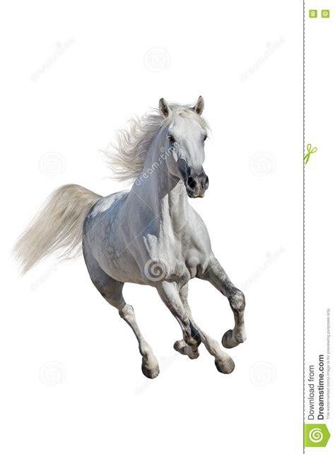 isolated horse