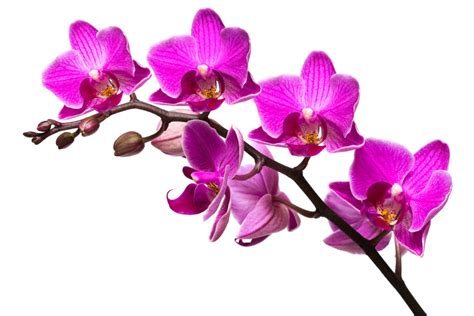 The Gallery For --> Purple Orchids