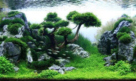 Aquascape Wallpaper by Aquascape Wallpaper Aquascape Ideas