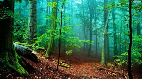 Green Forest Trees Cut Down Hd Wallpaper Stylishhdwallpapers