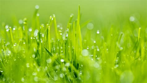 morning dew wallpapers morning dew grass  wallpaper