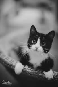 tuxedo cat names best 25 tuxedo cats ideas on cats tuxedo