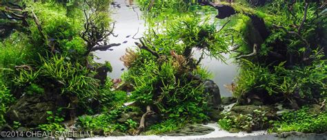 Planted Aquascape by Best Aquascapes Of 2014 Aquarium Info
