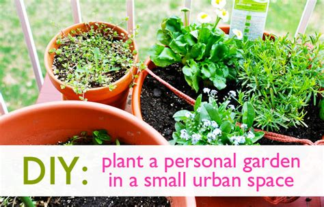diy how to plant a personal garden in a small urban space inhabitat green design