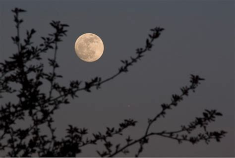plante de cuisine jardiner avec la lune comprendre le calendrier lunaire