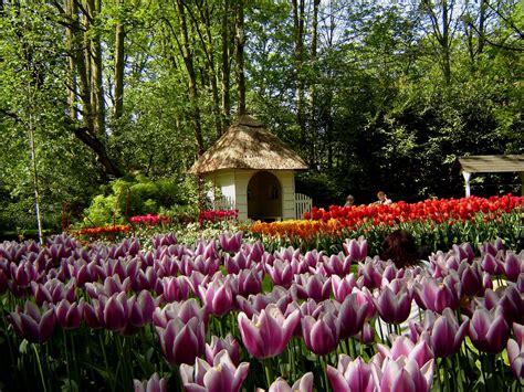 beautiful keukenhof park  holland
