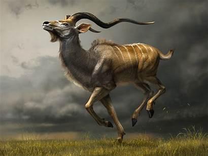 Kudu Animal Animals Wild Horns Dangerous Deer