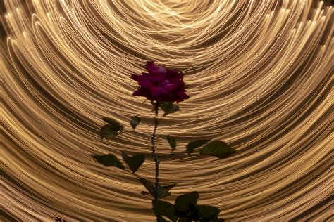 Elettric rose   JuzaPhoto