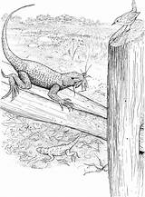 Lizard Coloring Pages Animals Fence sketch template
