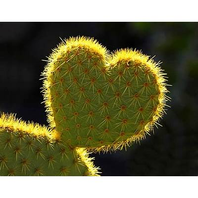 Heart-shapes in nature - robertharding.com news