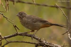 North Central Texas Birds