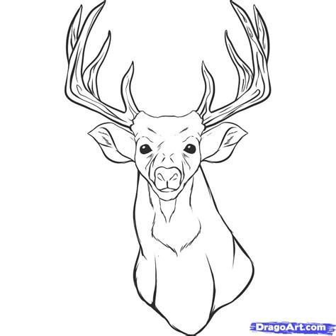 draw  realistic deer draw real deer step  step