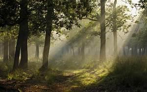 Wallpaper, Sunlight, Trees, Landscape, Forest, Nature, Grass, Plants, Photography, Green
