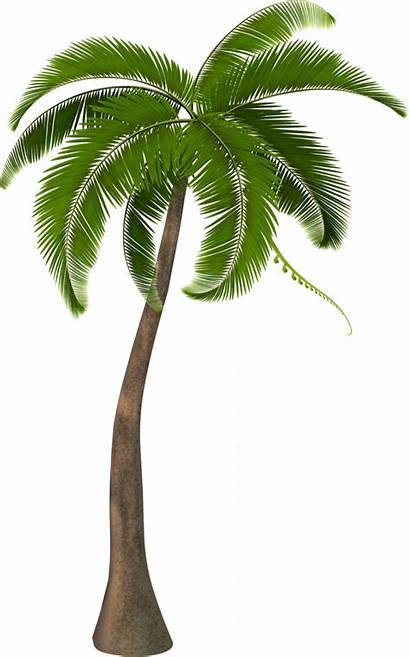 Palm Tree Trees Laguna Hills Birthday Park