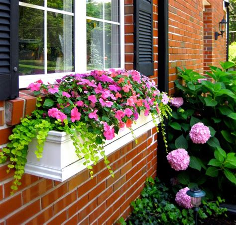 Outside Window Sill Planter by The Best Plants For Wonderful Window Boxes