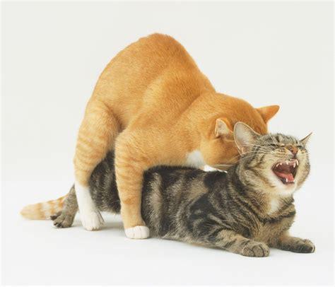 how do cats mate how to fix cat sex behavior problems