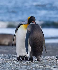 Emperor Penguin!!