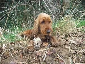 Bandol France évènements à Venir : tr bandol of merrily chien de race toutes races en tous ~ Dailycaller-alerts.com Idées de Décoration