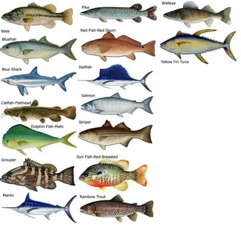 types  saltwater fish research common types  salt