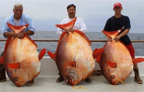 opah caught fish record biggest california fishes fishing lb pound ever largest saltwater three records excel water ocean giant waters