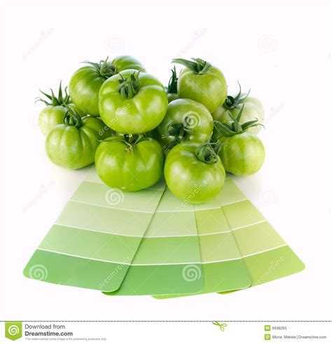 matching green paint colors to nature royalty free stock