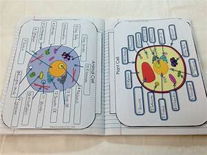 Structure of Life Interactive Notebook Pages | Plant cell ...