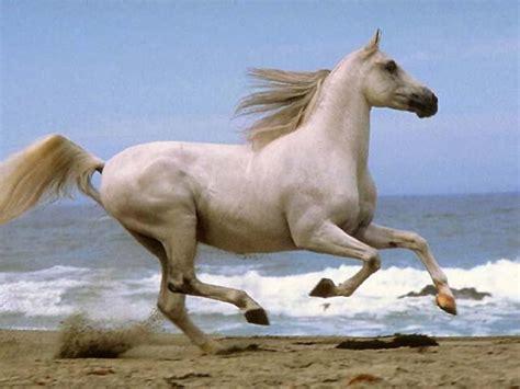 horses running nice horse run galloping wild