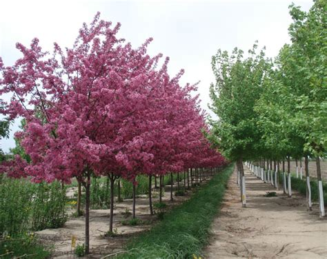 Iowa Tree Nursery by Dunlap Enterprises Anderzhon Nursery Sales