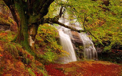 Forest Waterfall Wide Desktop Background - HD Desktop ...