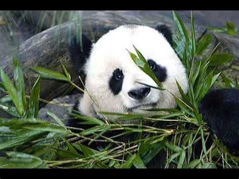 animales hermosos en peligro de extincion youtube