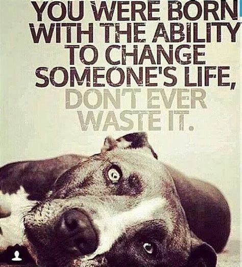 quotes  dogs images  pinterest doggies