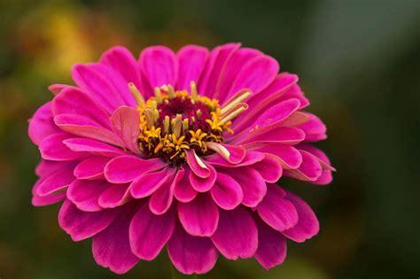 heat plants tolerant survive summer thrive sun brutal give zinnia plenty