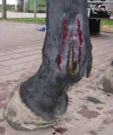die blutegel therapie beim pferd wittelsbuergercom