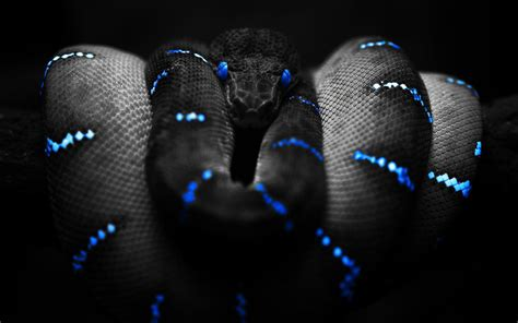 Snake HD PC Wallpapers 7272 - Amazing Wallpaperz