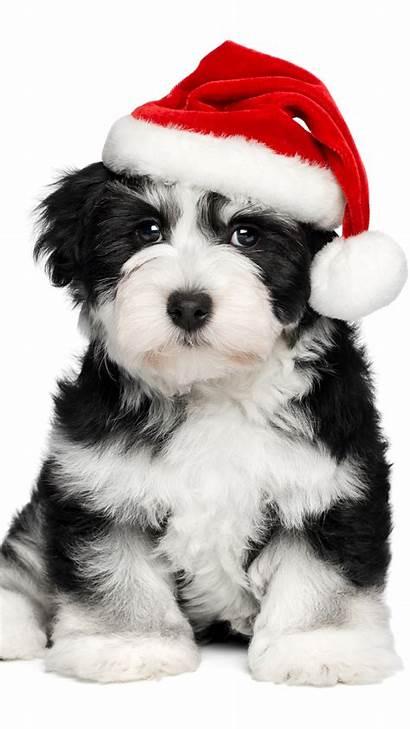 Iphone Dog Puppy Navidad Wallpapers Fondos Pantalla