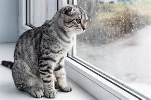 cat separation anxiety what to do if your cat has separation anxiety
